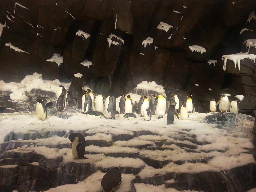 пингвины в орландо